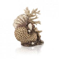 Коралловая ракушка