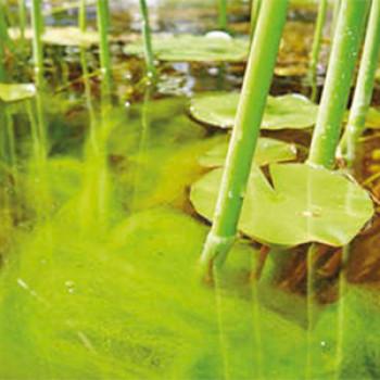 Средства от водорослей